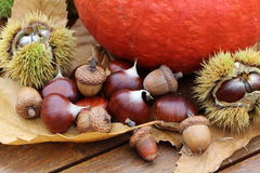 Chestnuts, husk, pumpkin and dead leaves. During autumn Royalty Free Stock Images