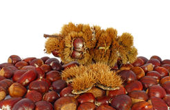 Chestnuts inside husk. On heap of chestnuts Stock Images