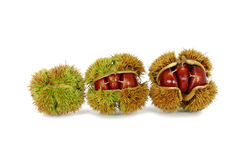 Chestnuts inside husk. Isolated on white Royalty Free Stock Photo