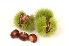 Chestnuts isolated. Fresh chestnuts isolated on white background Stock Photos