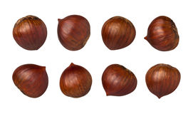 Chestnuts Isolated with clipping path Royalty Free Stock Images
