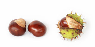 Chestnuts isolated on white Stock Images