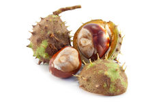Chestnuts isolated Royalty Free Stock Photo