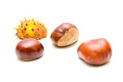 Chestnuts. Isolated on white background Stock Image