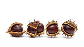 Chestnuts isolated on white background Royalty Free Stock Image