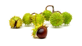 Chestnuts isolated on white background. Stock Photos