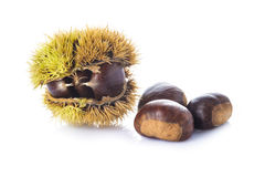 Chestnuts in its burr isolated on a white background Royalty Free Stock Images