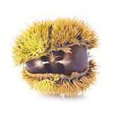 Chestnuts in its burr isolated on a white background Royalty Free Stock Photography