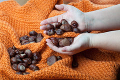 Chestnuts on a knitted orange background and in the hands Royalty Free Stock Photos
