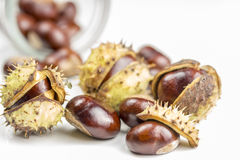 Chestnuts laying on on white background Stock Photography