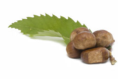 Chestnuts and a leaf. Royalty Free Stock Photos