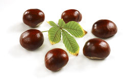 Chestnuts with leaf Royalty Free Stock Photography