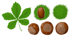 Chestnuts and leaf. On white background Stock Images