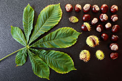 Chestnuts with leaf Royalty Free Stock Photo