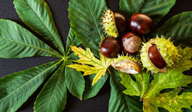 Chestnuts with leaf Royalty Free Stock Images