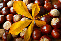 Chestnuts with leaf Stock Photo