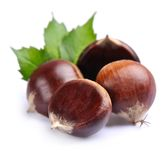 Chestnuts with leafs Royalty Free Stock Photos