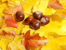 Chestnuts and leaves Stock Images