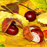 Chestnuts on leaves Stock Photo