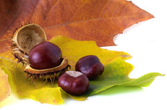 Chestnuts and leaves Stock Photos