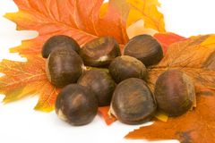 Chestnuts on a leaves Stock Photo