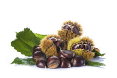 Chestnuts with leaves and burrs isolated on a white background Royalty Free Stock Photo