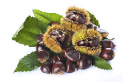 Chestnuts with leaves and burrs isolated on a white background Stock Image