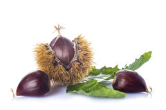 Chestnuts with leaves and burrs isolated on a white background Stock Images