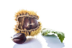 Chestnuts with leaves and burrs isolated on a white background Royalty Free Stock Images