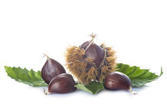 Chestnuts with leaves and burrs isolated on a white background Stock Photos