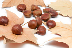 Chestnuts and leaves Royalty Free Stock Images