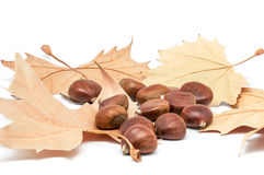 Chestnuts and leaves 3 Royalty Free Stock Photography