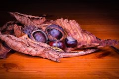 Chestnuts and leaves on a table royalty free stock photography