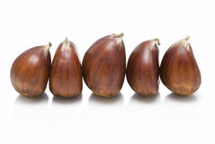 Chestnuts on line. Some chestnuts isolated on white background Royalty Free Stock Image