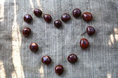 Chestnuts lined on a cloth in the shape of a heart. Chestnuts laid out on a heart-shaped fabric in a sunny day Royalty Free Stock Photos