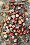 Chestnuts lying on the ground Stock Photos