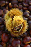 Chestnuts on natural background Royalty Free Stock Images