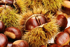 Chestnuts, nature background Royalty Free Stock Images