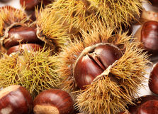 Chestnuts, nature background Stock Photography