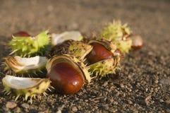 Chestnuts near Stock Image