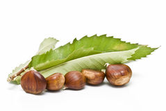 Chestnuts near to a leaf. Some chestnuts on one of its leaf isolated on white background stock images