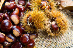 Chestnuts on an old board. Some Chestnuts on an old board Royalty Free Stock Photo