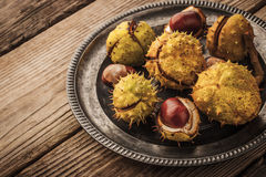 Chestnuts on the old  vintage metal plate with film filter effect  horizontal Stock Images