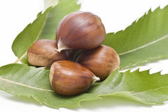 Chestnuts on one of its leaves. Royalty Free Stock Photo