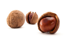 Chestnuts in open peels. Chestnut peels in three stages Stock Photography
