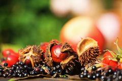 Chestnuts and other autumnal fruits Royalty Free Stock Photos