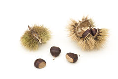 Chestnuts and Husks Royalty Free Stock Image