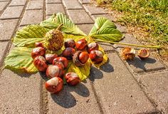 Chestnuts on the pavement Royalty Free Stock Photo