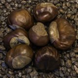 Chestnuts on pebblesstone. Chestnuts on brown stone pebbles Stock Images
