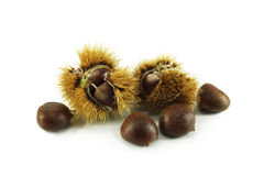 Chestnuts in the peel. On white background Royalty Free Stock Image